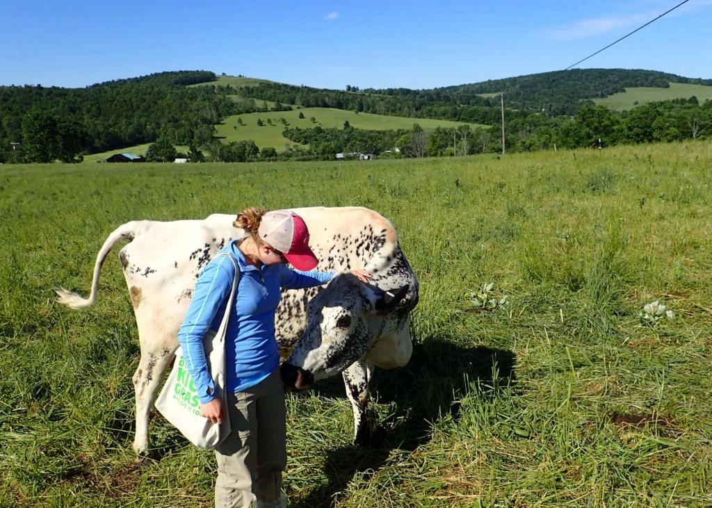 organic valley grassmilk farm