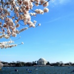 Spring is here + DC Cherry Blossom Photos