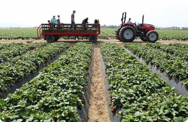 terry farms hay ride