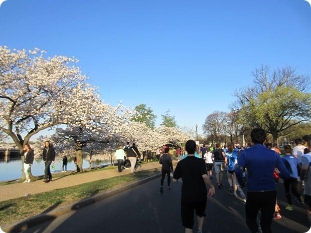cherry blossom 10 miler 2015