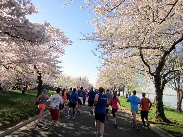 Cherry Blossom 10 Miler 2015 Race Recap - fANNEtastic food ...