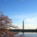 Cherry Blossom Running Finale + An Interview with Brooks Elite Marathoner Desiree Linden