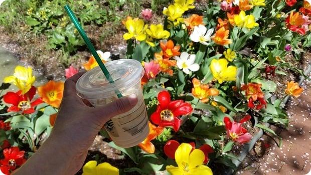 georgetown dc spring flowers
