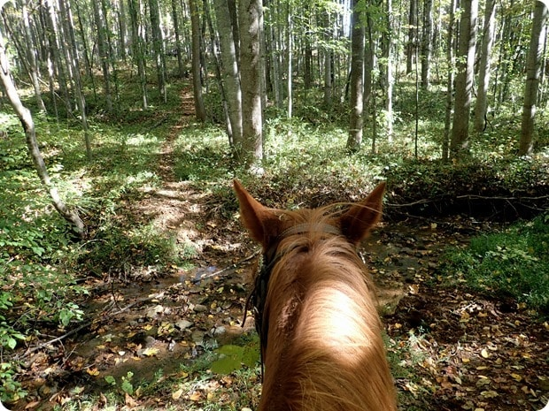 rebels run afton mountain horseback riding