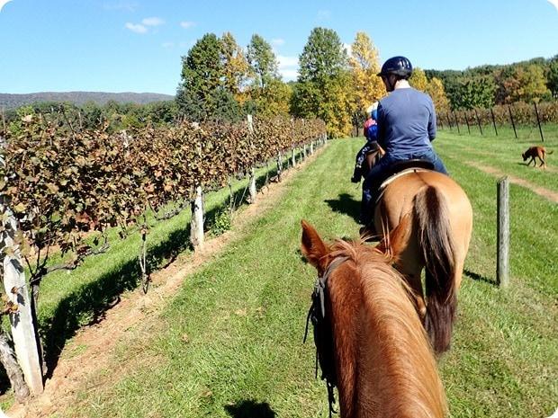 afton mountain vineyards horseback riding