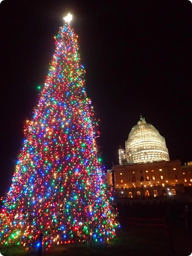 us capitol christmas tree