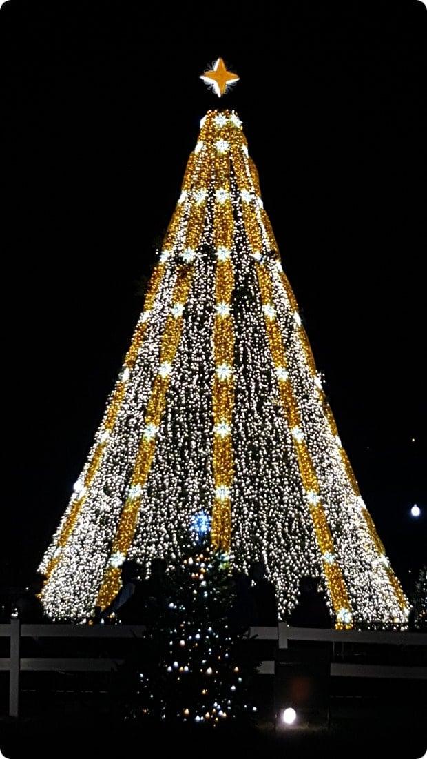 national christmas tree1