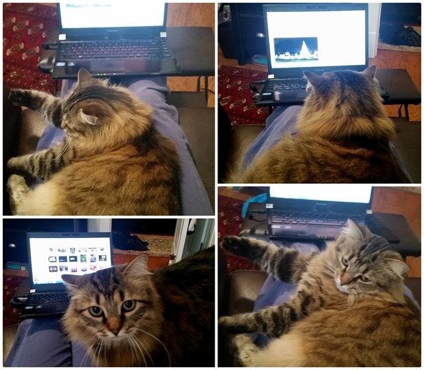 trying to work with a cat in your lap