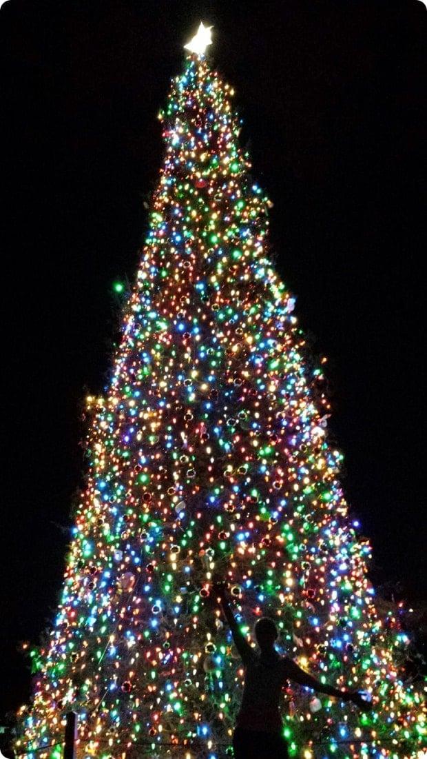 washington dc holiday christmas trees