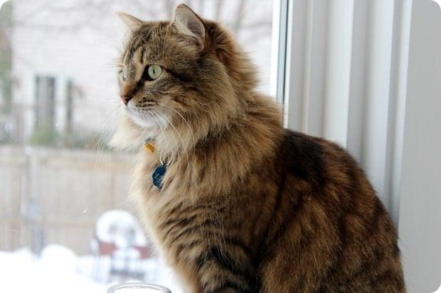 zara the cat