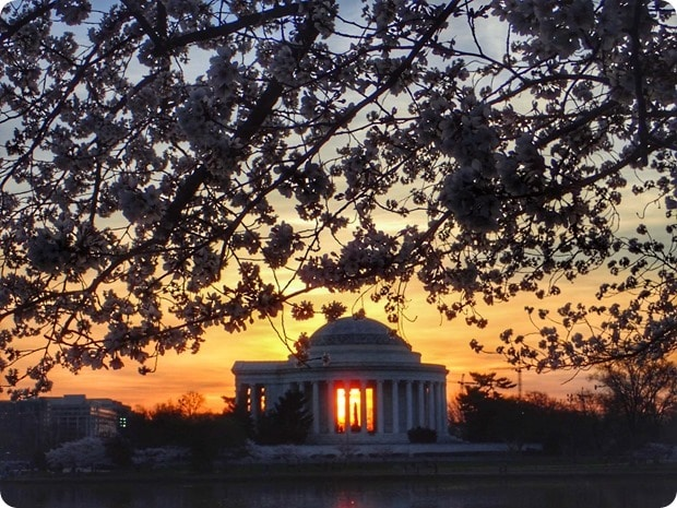jefferson memorial cherry blossom sunrise