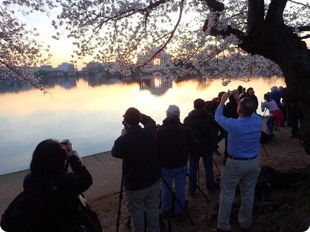 cherry blossom dc photographers