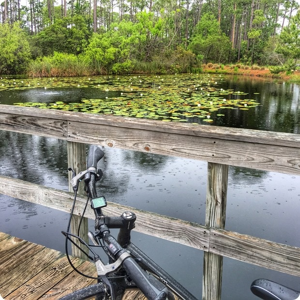 biking watercolor florida