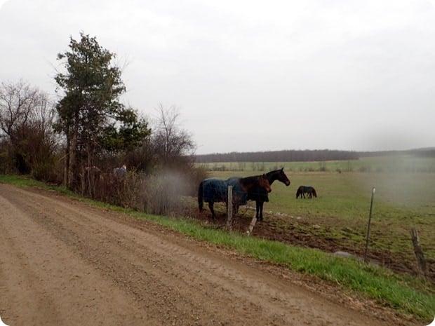 middlebury horses