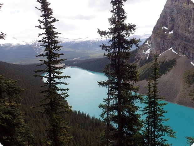 lake louise beehive trail
