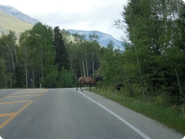 driving in canadian rockies