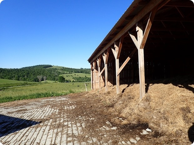 winter shelter for cows
