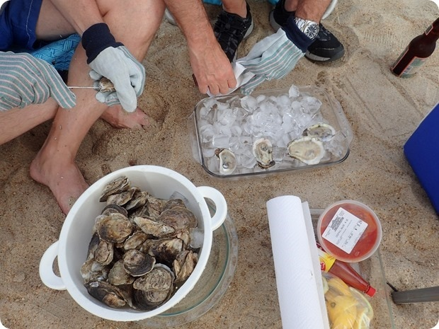 fresh oysters on the beach
