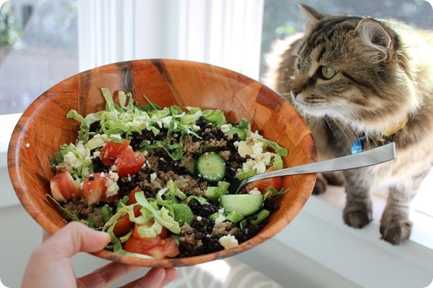 lunch salad with cat