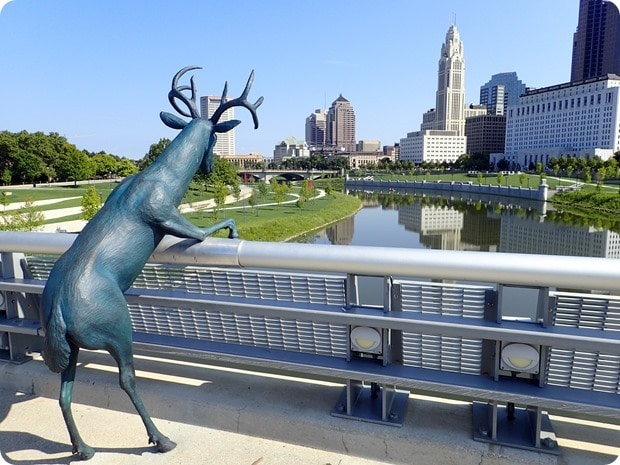 deer on a bridge columbus