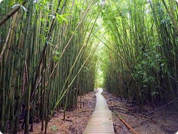 bamboo forest hike maui