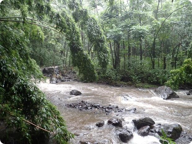 rainforest hike maui