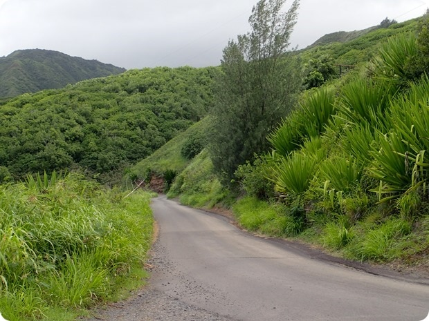maui narrow road