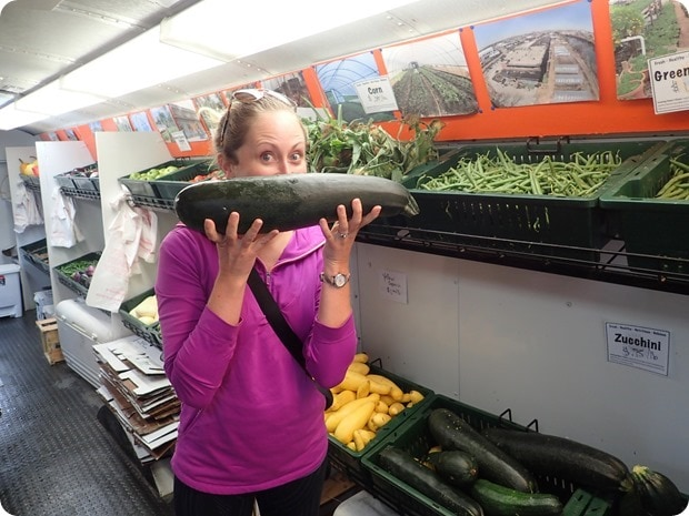 enormous zucchini