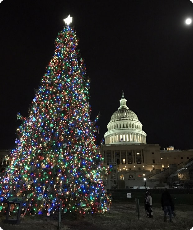 dc capitol christmas tree