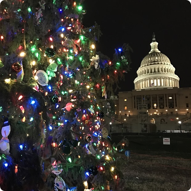 capitol christmas tree dc