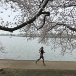 DC Cherry Blossom Run, Take 2