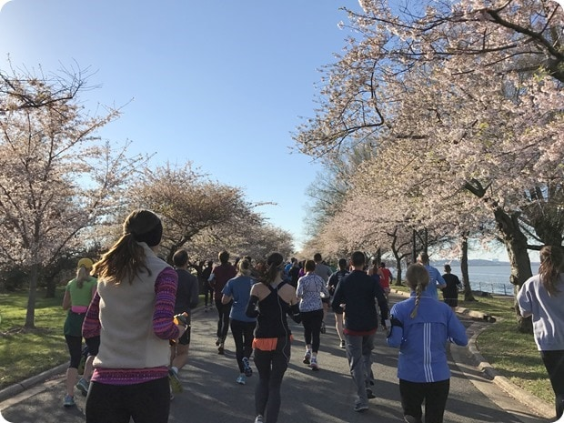 cherry blossom 10 miler 2017