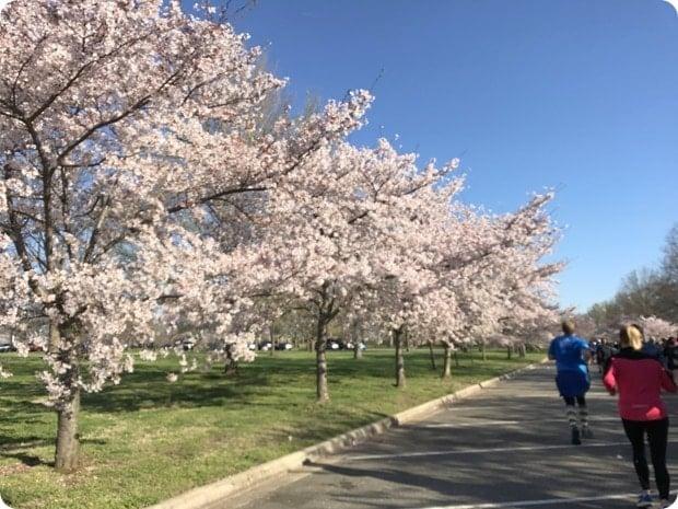 cherry blossom 10 miler 2017 race