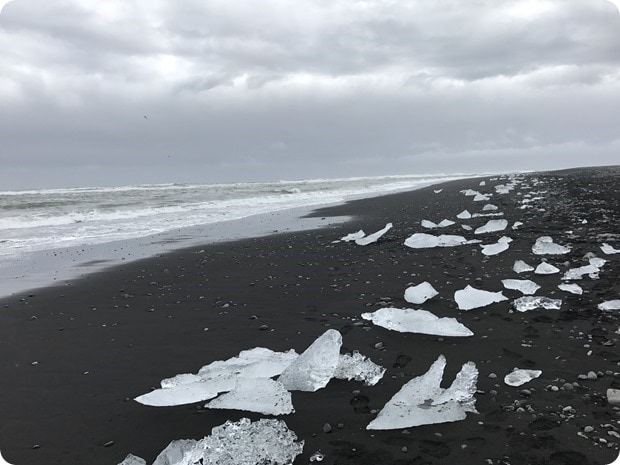 black sand beach with icebergs iceland