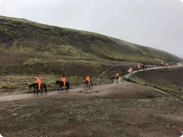Reykjadalur Hot Springs Hike horseback riding
