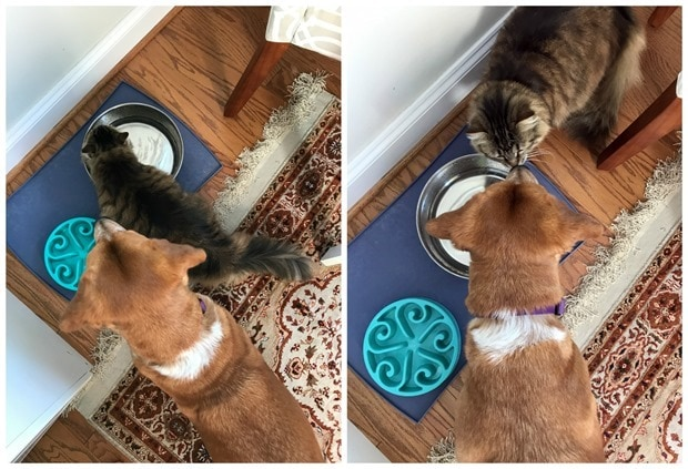 improving dog and cat interactions