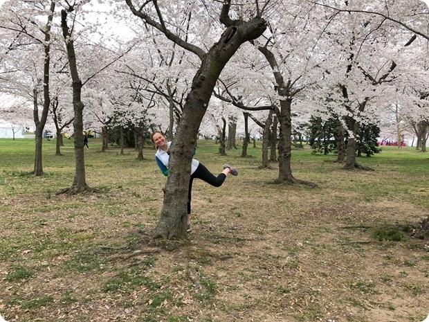 cherry blossom morning run 13