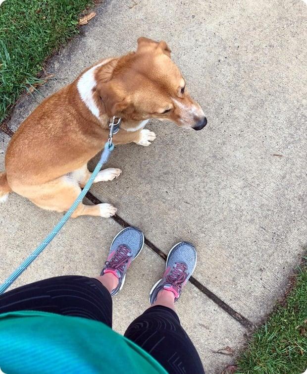 morning running buddy
