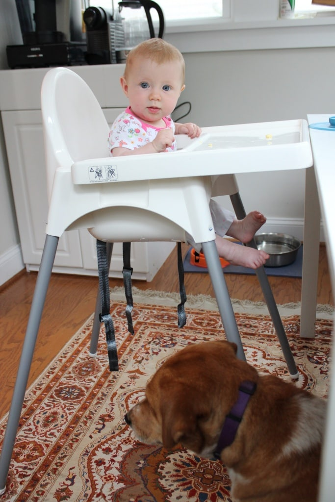 get a dog for baby led weaning clean up