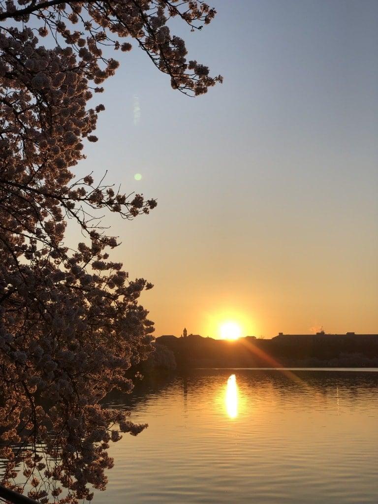 dc cherry blossom tidal basin run