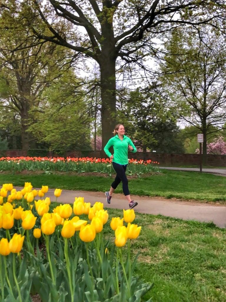 arlington va tulips running spring