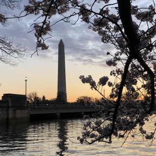 sunrise at the cherry blossoms