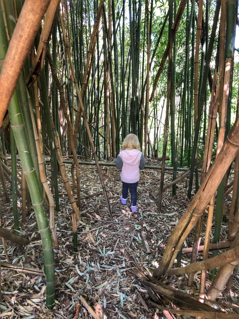 exploring the bamboo forest