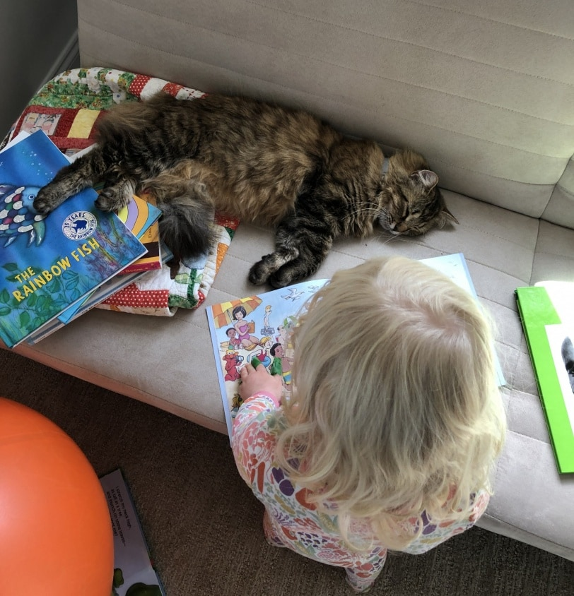 toddler reading a book to a cat