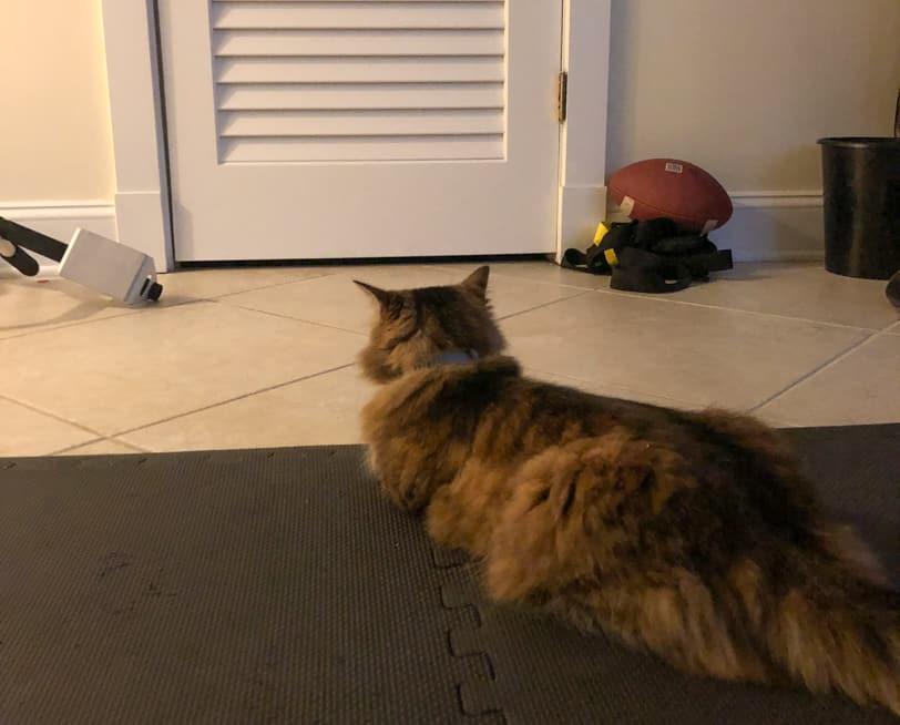 cat watching basement door