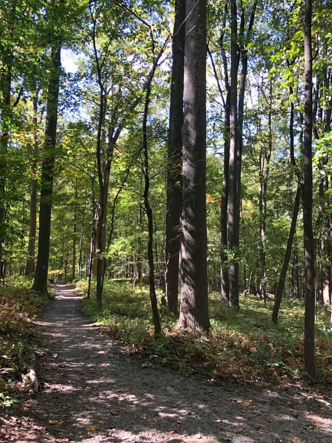 view of a wooded trail in catoctin mountain park
