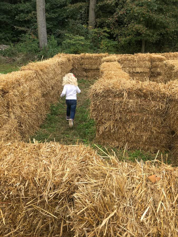 schlagel farms hay maze