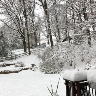 backyard winter wonderland