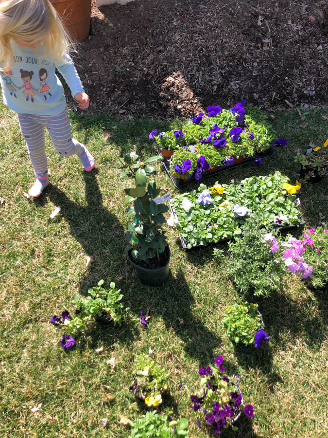 planting flowers for spring