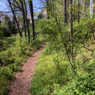 trail in vienna va